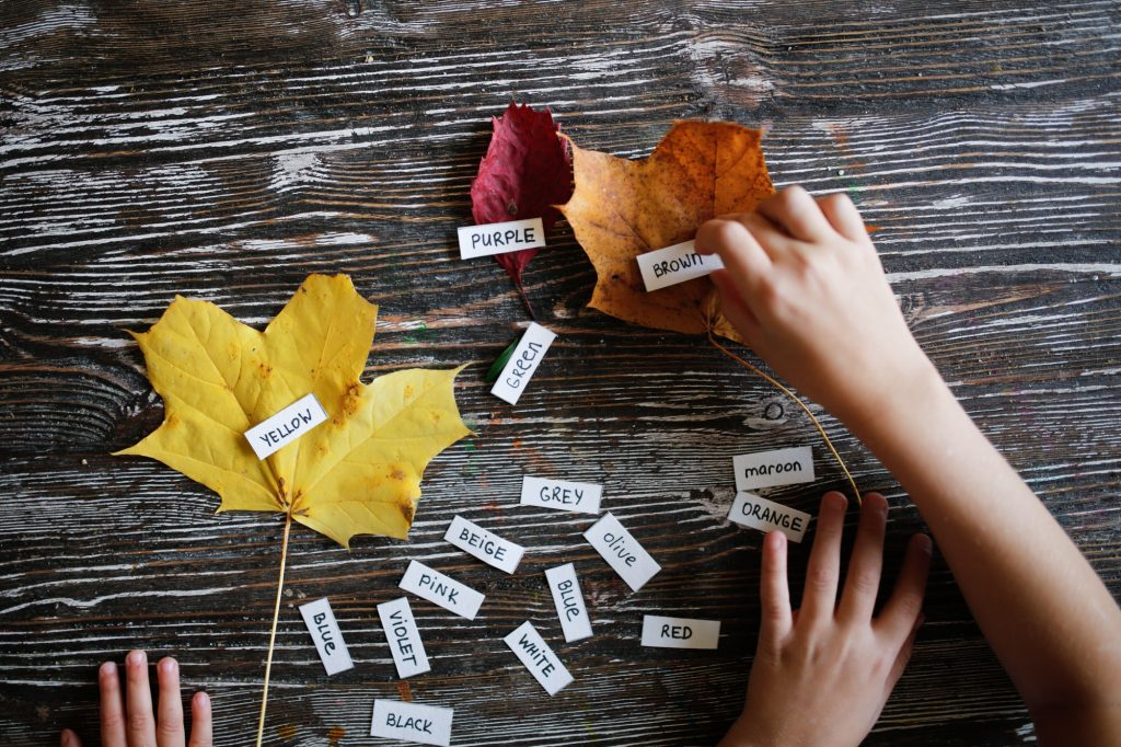 Learning color in English, homemade tutorials. Children learn colors with tree leaves.